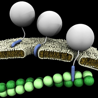UCLA Study Shows Cell-Penetrating Peptides for Drug Delivery Act Like a Swiss Army Knife