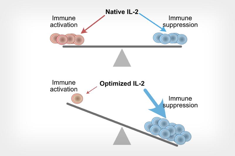 optimized cytokine protein IL-2