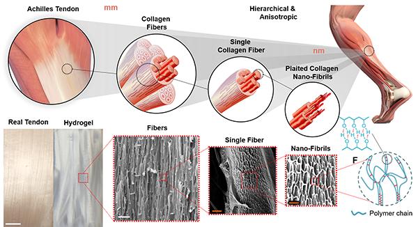 artificial tendon