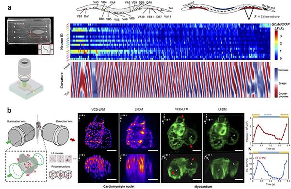 illustration shows biological processes